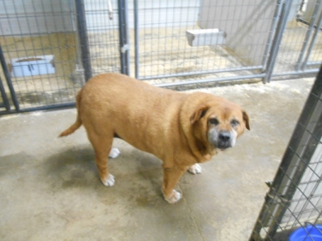 Patty--a good ole gal, that has a skin condition. She loves all visitors that comes to 12 Hills.