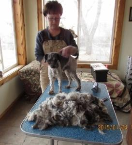 The Pile of hair--now the bath