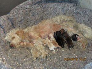 Mama and 8 puppies