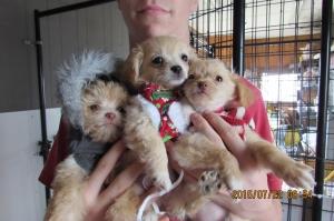 Shine's Puppies!