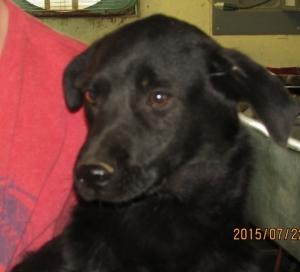 Truman--around 5 months old--shy--needs love.