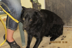 Shadow--a terrier/chow mix (female) 10 months old.   Very shy--calling her special needs-patient & loving home needed.